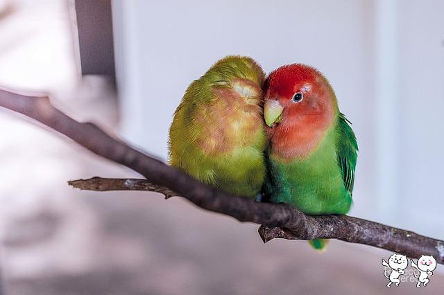 parrot-1245874_640