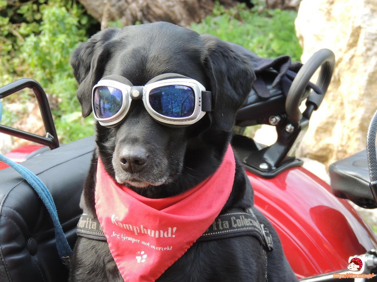 dog-171773_1280